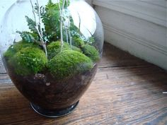moss terrarium with twigs