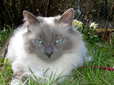 Smokey with his clear blue eyes.