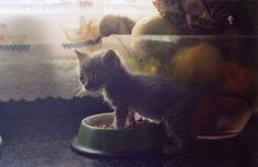 animals cat cute kitten