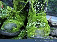 verde---➽viridi➽πράσινος➽green ➽verde➽grün➽綠➽أخضر ➽зеленый Forest Garden, Garden Art, Garden Plants, Garden Junk, Woodland Garden, Magic Forest, Mother Nature, Beautiful, Pretty