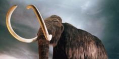 Scientists have plans to bring back a fair few animals from the past that died out.