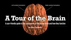 A Tour of the Brain. A user-friendly guide to the components of the human brain and how they function. - By Jon Caswell