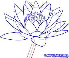 how to draw a water lily step 8