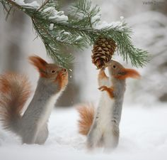 - World of Animals Animals And Pets, Baby Animals, Funny Animals, Cute Animals, Beautiful Creatures, Animals Beautiful, Cute Squirrel, Squirrels, Tier Fotos
