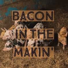 Yum Bacon . . . . . #nyfarms #farmtotable #westwindacres #artisanmeat #baconbits #pastureraisedpork #csa #meatCSA #meatsubscription #farmkids #baconfutures #healthymeats #healthy #healthyfood #saratogafoodadventures #foodgasm #instagood #redwattle #GMOfree #farm #healthysaratoga #alloveralbany #saratogasprings #enjoytroy #keepalbanyboring #eatlocal #farmlove #farmer @west_wind_acres @nicolenerostudio