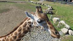 QC - Hemmingford - Parc Safari - 4 of 25 - Africa Terrace