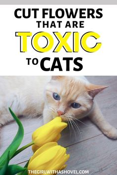 Did you know that some of your cut flower bouquets can actually cause your pets to get sick if eaten? Be sure to keep your cats and dogs safe by avoiding these cut flowers! DON'T BUY THESE FLOWERS TO KEEP YOUR PETS SAFE! Flowers safe for cats | Flowers safe for dogs | Indoor Plants Safe for Cats | Indoor Plants safe for Cats and Dogs | Poisonous house plants | Poisonous plants for dogs | Flowers safe for cats | Flowers safe for dogs | House plants safe for cats | House plants safe for dogs |