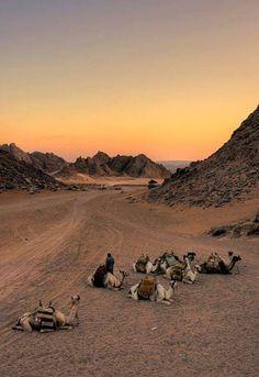 camel safari,Sharm El Sheikh Egypt