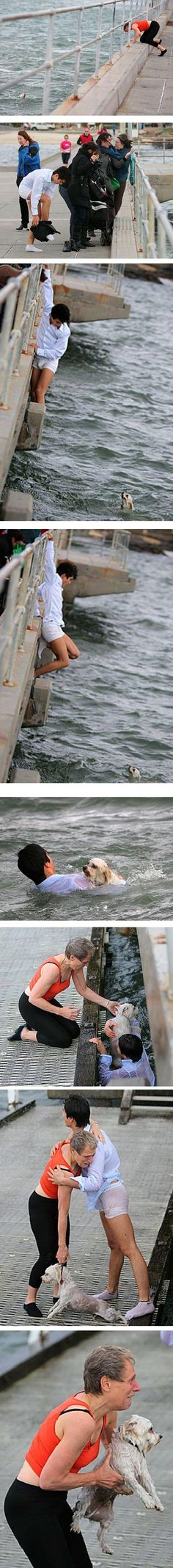 Faith in humanity: Hund retten - Win Bild