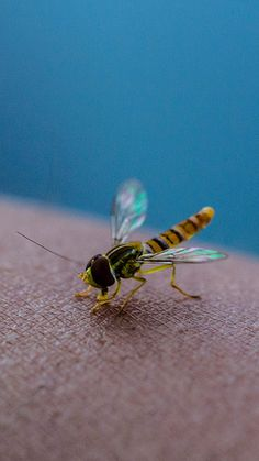 An insect from a corn field Insects, Trust, Birds, Spaces, Water, Animals, Water Water, Animais, Aqua