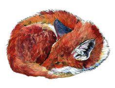 animal-watercolor-pencil-paintings-janie-stapleton-2