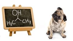 Why You Should Never Use Isopropyl Alcohol On Your Dog