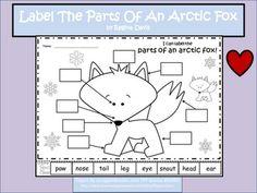 A+ Arctic Fox: Label The Parts Of The Arctic Fox Arctic Fox Habitat, Arctic Animals, Early Bird, Reading Books, Mini Books, Preschool, January, Goodies, Students