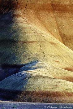 Pronghorn tracks - Painted Hills, Eastern Oregon