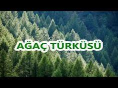 Ağaç Şarkısı / Ağaca Övgü (Sözlü Okul Şarkıları) - YouTube