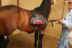 Horse Therapy, Surgery, Horses, Blog, Blogging, Horse