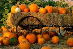 Pumpkins & Hayrides for Veterans by Bilbo Baggin - GoFundMe