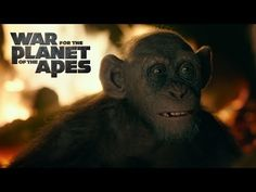 "War for the Planet of the Apes | Meeting Bad Ape | 20th Century FOX #TrailerAlert - Caesar and his band of Simian brothers discover an unknown, newly evolved ape named ""Bad Ape"" (Steve Zahn) – an escapee from a zoo. For the first time in the trilogy, Caesar and his apes discover a new ape outside of their tribe, marking a critical moment in the war between Humans and Apes. In War for the Planet of the Apes, the third chapter of the critically acclaimed blockbuster franchise, Caesar and his…"