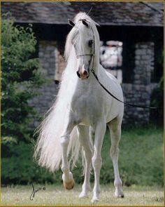 Horse such a beautiful animal!!!!
