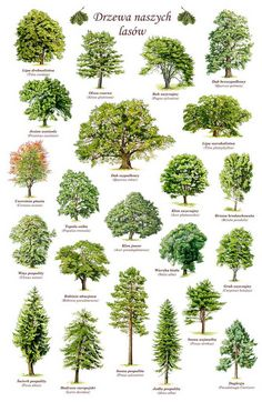 – Laub- und Nadelbäume - deciduous and coniferous trees, Planting Ideas # Landscape Architecture, Landscape Design, Garden Design, Watercolor Trees, Watercolor Landscape, Garden Trees, Trees To Plant, Landscape Drawings, Landscape Paintings