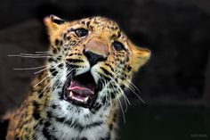 Cub leopard by ryu jong soung on 500px