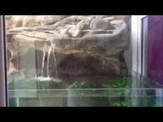 Bob Hawke Universal Rocks Cichlid tank is looking great Bob Hawke, Aquarium Rocks, Rock Videos, Fish Tanks, Cichlids, Ponds, Looks Great, Aquariums, Tilapia