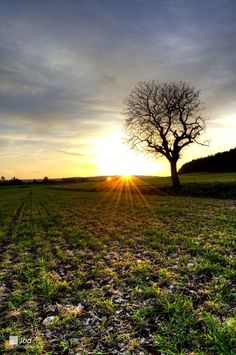 French sunset (Rivire les fosses, France) by #Julienbagnard #sunset #tree #france mes-photographies