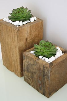 Succulents - great for a patio