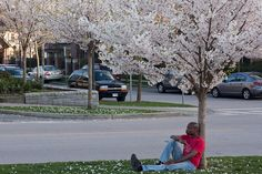 A Cherry Blossom moment by tyfn, via Flickr  -  Canon XSi+50mm f/1.8 | f/8.0, 1/30, ISO 100