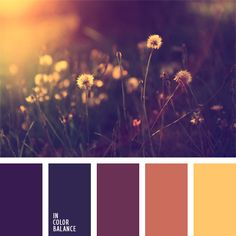 The color palette number 237  coral color palette for the designer selection of color, dark purple, warm shades of purple, violet and orange, the color of an eggplant color decor,