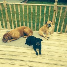 The gang - my baby's