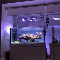 あーなんて楽しいアクアリウム♪ What a fun reefing! #アクアリウム #acropora #ミドリイシ #たらふく Marine Aquarium Fish, Marine Fish Tanks, Coral Reef Aquarium, Saltwater Aquarium Fish, Marine Tank, Live Aquarium, Saltwater Tank, Glass Aquarium, Planted Aquarium