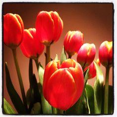 Tulip obsession ! :)