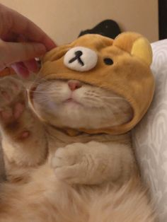 Cute Baby Cats, Cute Kittens, Cute Cats And Dogs, Cute Little Animals, Cute Funny Animals, I Love Cats, Cats And Kittens, Funny Animal Photos, Cute Cat Wallpaper