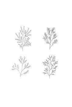 Illustration by Ryn Frank www.rynfrank.co.uk Botanical Line Drawing, Floral Drawing, Piercings, Piercing Tattoo, Floral Illustrations, Botanical Illustration, Floral Doodle, Tattoo Feminina, Flower Doodles