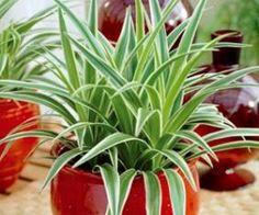 9 plantes d 39 int rieur d polluantes assainissantes mais faciles vivre sant pinterest
