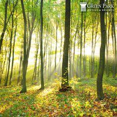 Haftasonunu yeşilin binbir tonu içinde bol bol oksijen depolayarak karşılamak için The Green Park Kartepe Resort & SPA'ya davetlisiniz.