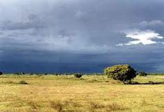Las sabanas llaneras conforman uno de los paisajes de mayor impacto visual en el Llano venezolano. En ellas divisando hasta el horizonte, podemos ver las ...