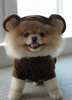 I'd love to say i think people dressing their dogs is ALWAYS dumb..... But.... Lookit his widdle fluffy head!  He's so fluffy i'm gonna die!