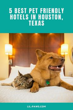 5 Best Pet Friendly Hotels in Houston, Texas  Not all hotels in the Houston area see animals as a trouble. Many open their doors to family pets as well as their traveling human buddies. Before your next stay at a Houston hotel, take a look at this checklist for the best places to bring your pet while taking a trip. #traveltexas #texas #texastravel #igtexas #exploretexas #texastodo #visittexas #travel #texashillcountry #onlyintexas #westtexas #roadtrip #cattravel #dogtravel #pettravel