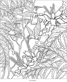 Creative Haven AMAZON ANIMALS A Coloring Book With Hidden Picture Twist By Jan Sovak COLORING PAGE 4