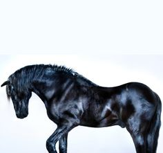 All The Wild Horses by Ph. Andrew McGibbon