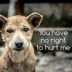 Stop eating dog meat, these animals have the right to live.Repost if you think we should put an end to animal cruelty. All Dogs, I Love Dogs, Dogs And Puppies, Doggies, Amor Animal, Mundo Animal, Dog Quotes, Animal Quotes, Bible Quotes