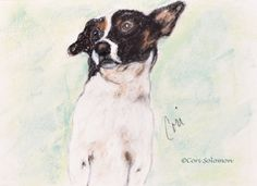 Sport : Mixed breed dog by Cori Solomon. When a close girlfriend lost her dog of many years, I had to give her a drawing of her dog, Sport. Although Sport, a mixed breed was not a Saluki like his roommates, sometimes I think he thought he was as tall and fast as them. This dog portrait of Sport portrays the strong spirit of this little guy.