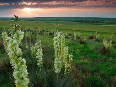 http://www.tripadvisor.com/LocationPhotos-g28937-Kansas.html