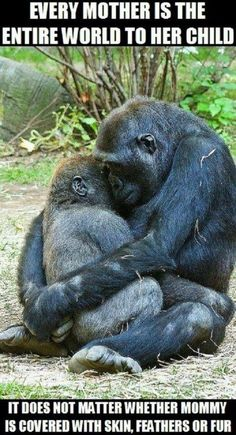 """Mother Gorilla Hugs B mother gorilla gently hugs it's 3 year old baby. """"One of the best things about watching the great apes is to capture a moment like this when they do something so human like."""" Bronx Zoo, NY by Evan Animals, via baby Animals The Animals, My Animal, Cute Baby Animals, Funny Animals, Strange Animals, Wild Animals, Animals Planet, Young Animal, Animals Images"""