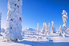 Google Image Result for http://www.alaska-in-pictures.com/data/media/19/eureka-snow-trees_1357.jpg