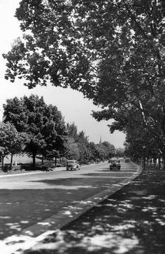 1937: Trees cast shadows on Alexandra Ave, Melbourne. Picture: Herald Sun Image Library
