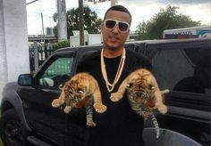 Tigers part 2 *.*