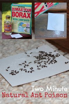 How to Make Non-Toxic Homemade Ant Poison. Got little ants in the kitchen? This mostly natural, non-toxic homemade ant poison is your new best friend. Kill those sugar ants without hurting your family, and it only takes 45 seconds to put together. For rea Diy Cleaning Products, Cleaning Hacks, Rv Hacks, Borax For Ants, Borax To Kill Ants, Ants In House, Get Rid Of Ants, Rid Ants, Diy Home